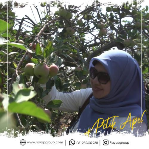 Rayap Outbound Petik Apel